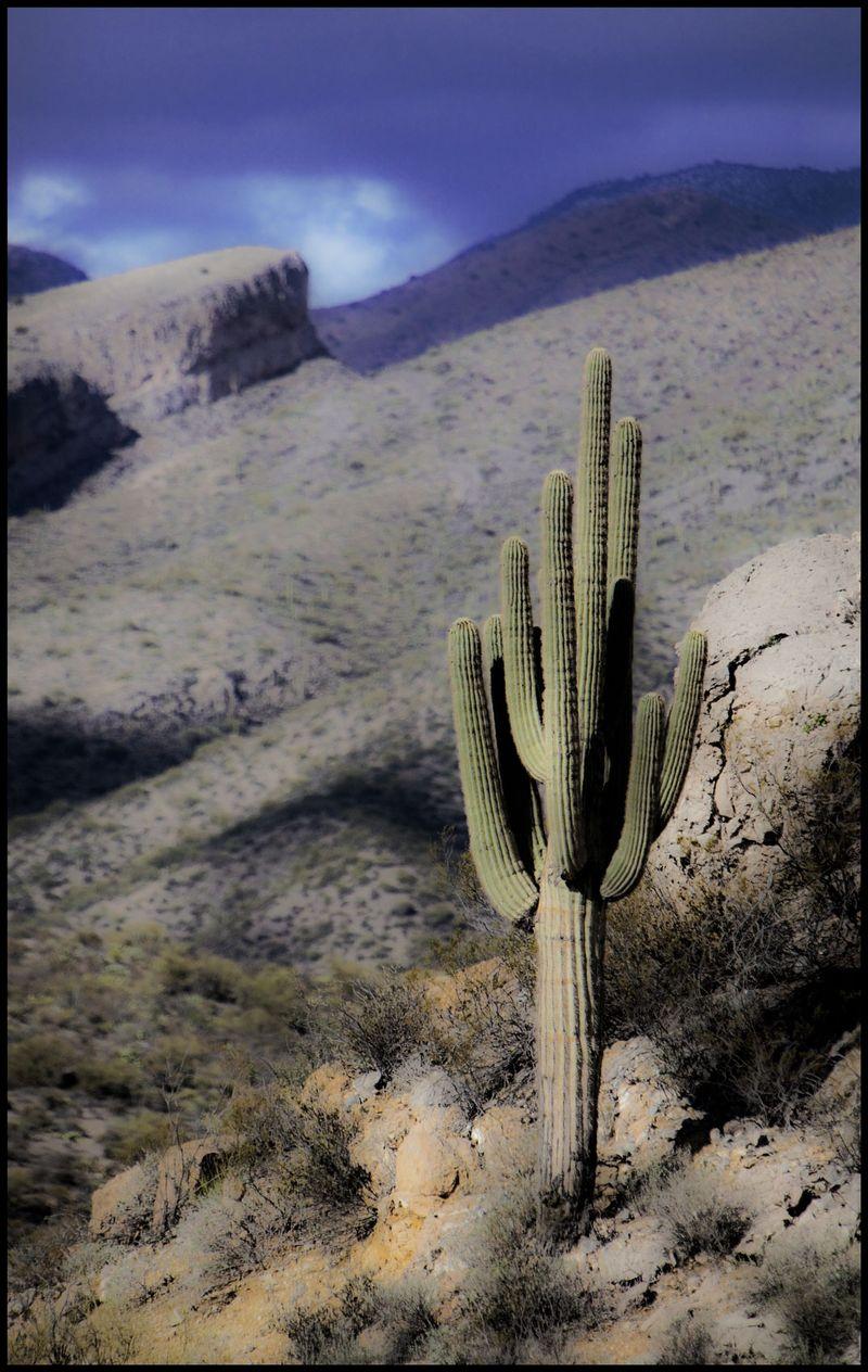 Saguaro-at-Cathy's-Fault-#2