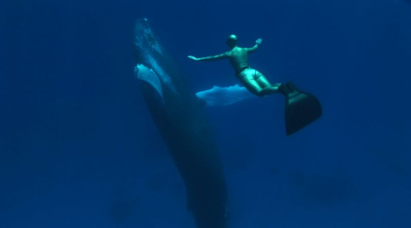 Mandy and humpback 2