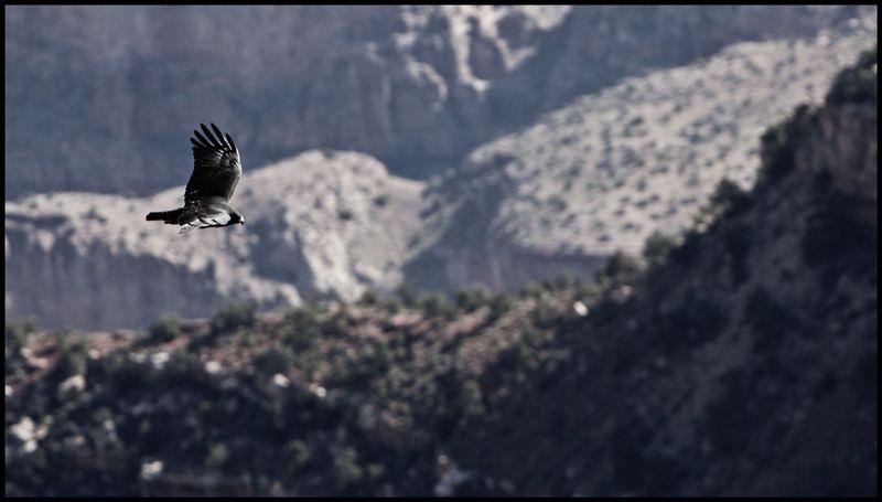 Grand-Canyon-Flight-#2