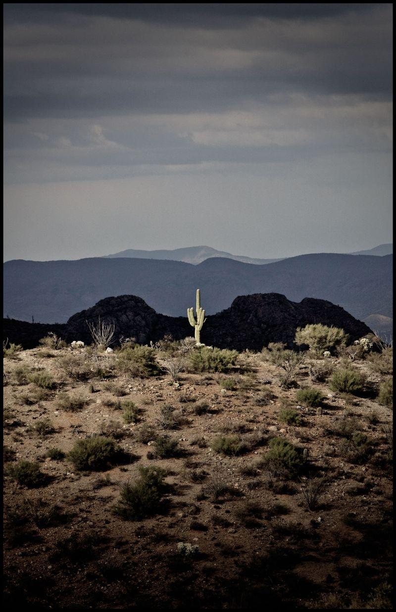 Lone-Saguaro-AZ-Trail-#2