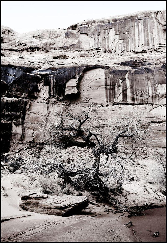 Horseshoe-Tree-#2