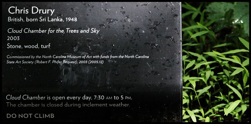 For-The-Trees-&-Sky-#1