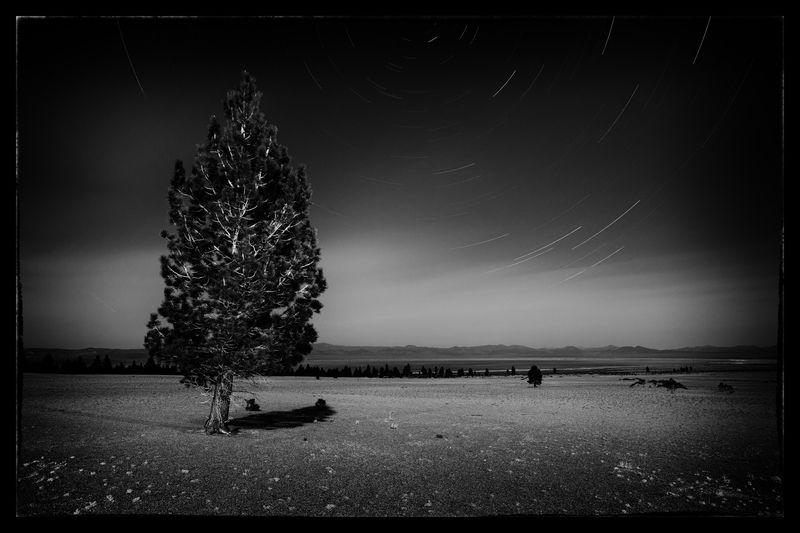 Shawn Peterson's Pumice Tree #1