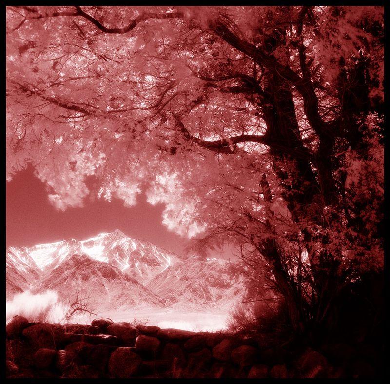 Manzanar-Infrared-#2