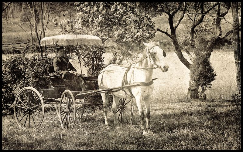Albert-Saum's-Horse-#3