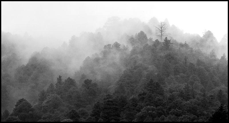 Wrightston-Fog-#2