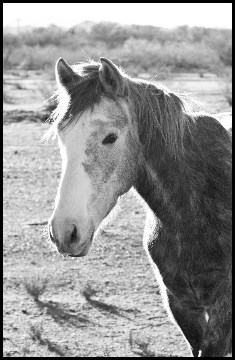 Roan-Horse-#2