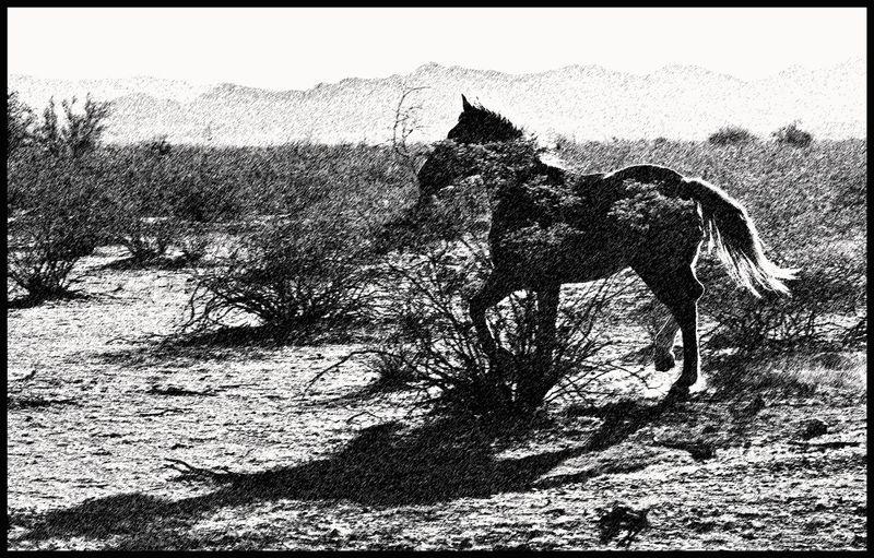 Tohono-Prancing-Horse-#2 [GP]