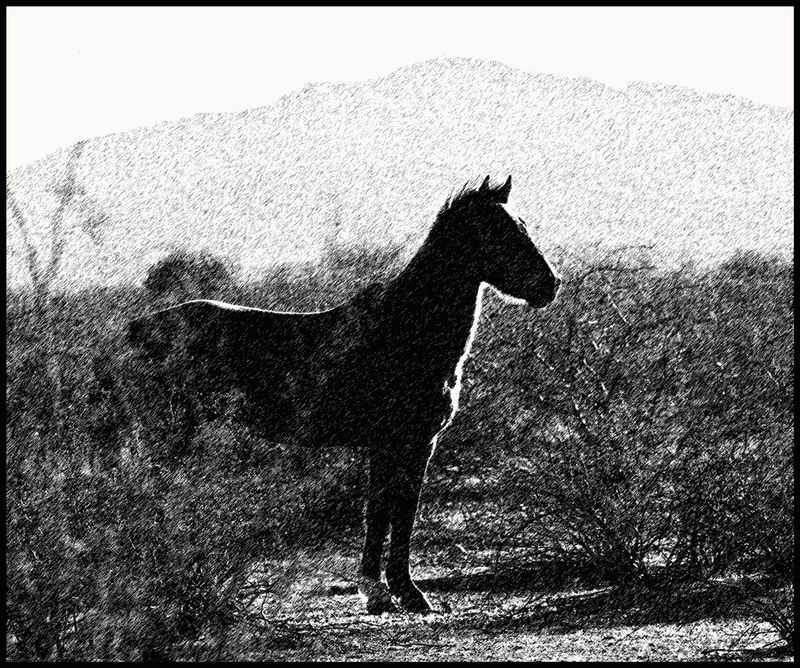 Tohono-Quarterhorse-[GP]-#2