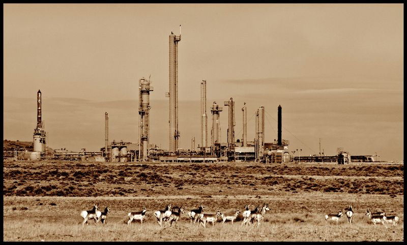 WY-Oil-&-Antelope-#2