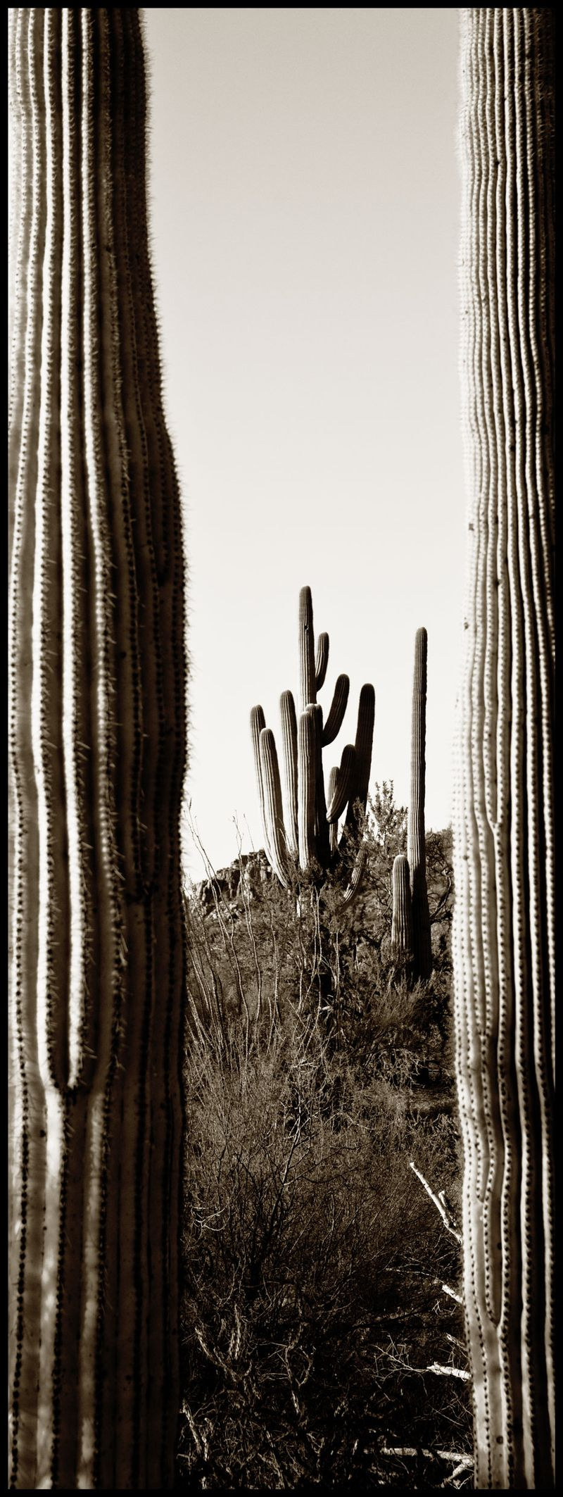 Saguaro-Window-#2