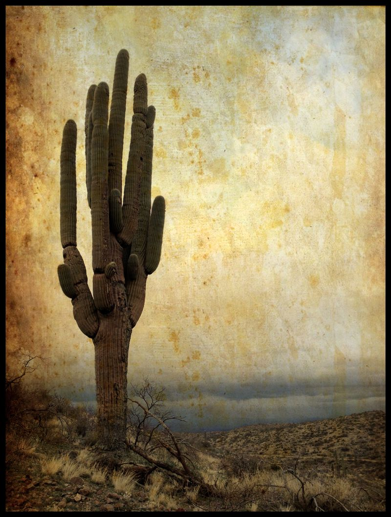 Ancient-Saguaro-#2