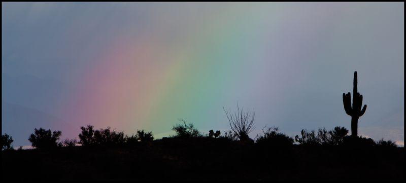 Rainbow-Saguaro-#1