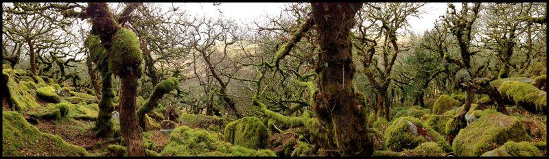 Wistman's-Wood-Devon-#1