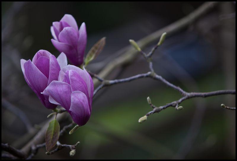 Purple-Flower-Telegraph-Hill-#1