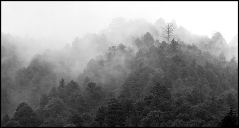 Wrightston-Fog-The-41-Nights-#1