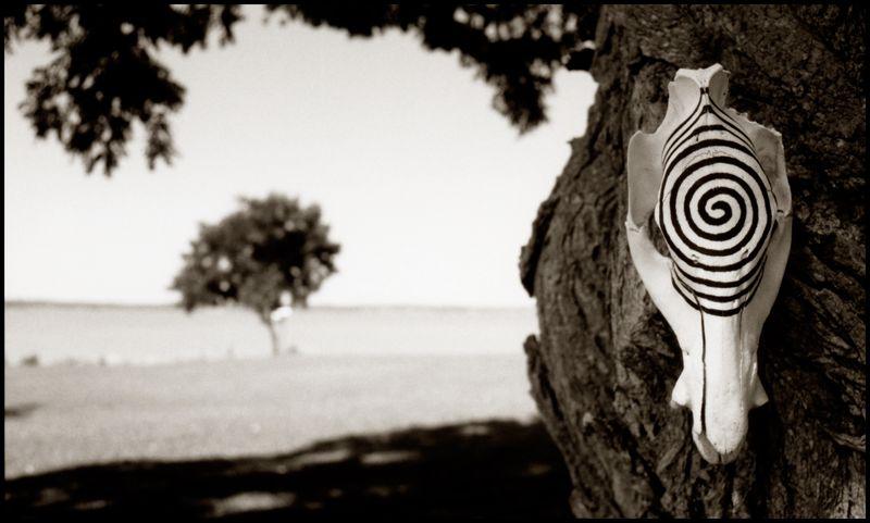 Javelina-Ed-Lil-Spiral-#2