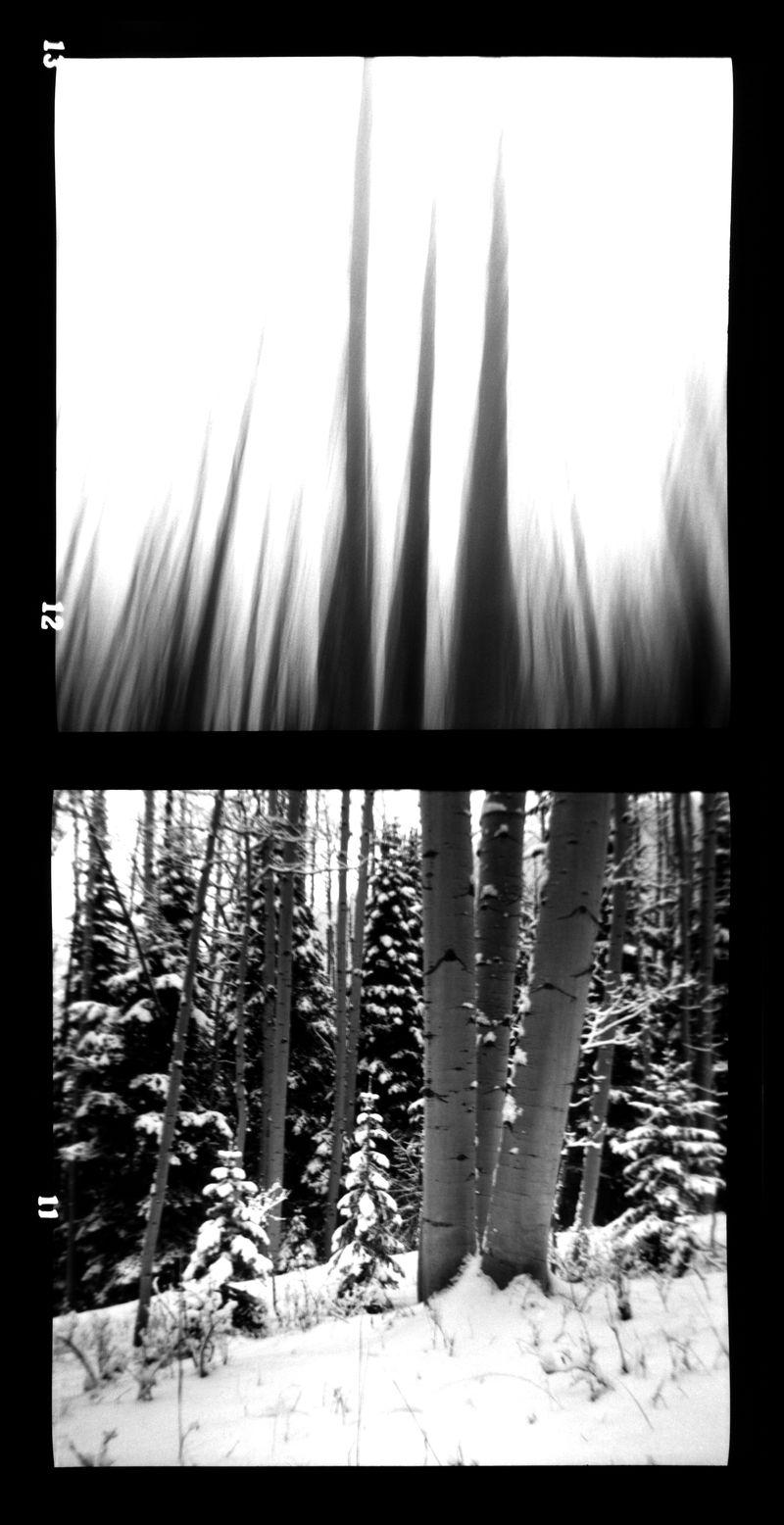 Snow-Aspens-Ascending-#15