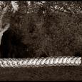 Chagford-Hoop-Dance-#5-(Detail)