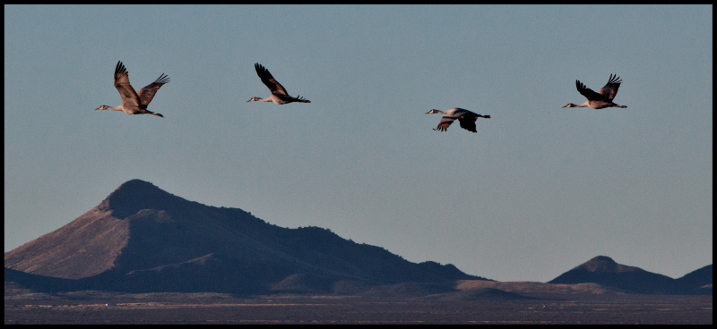 Four-More-Cranes-Whitewater-#7