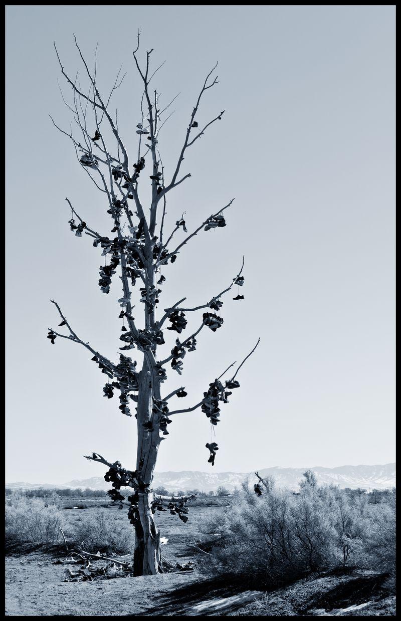 Hinckley-Utah-Shoe-Tree-#16