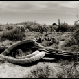 Newly-Dead-Saguaro-#17