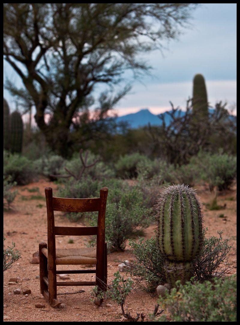 PBRC-Owl's-Head-Baby-Saguaro-#1