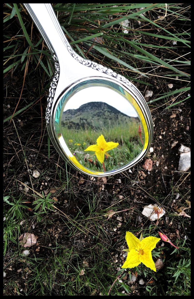 NM-Mustang-Mountain-Flower-#3