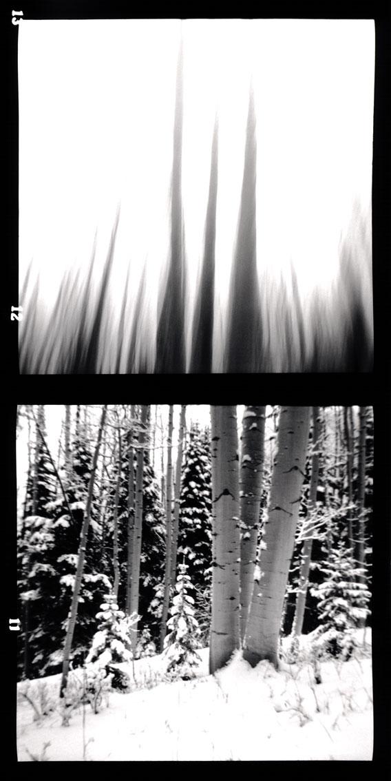The Snow Aspens, Utah