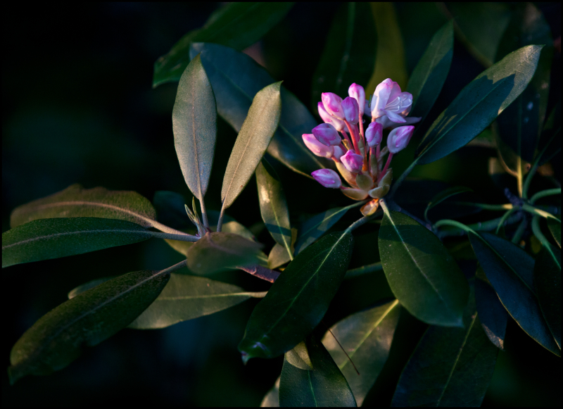 Table-Rock-Flower-At-Last-Light-#17