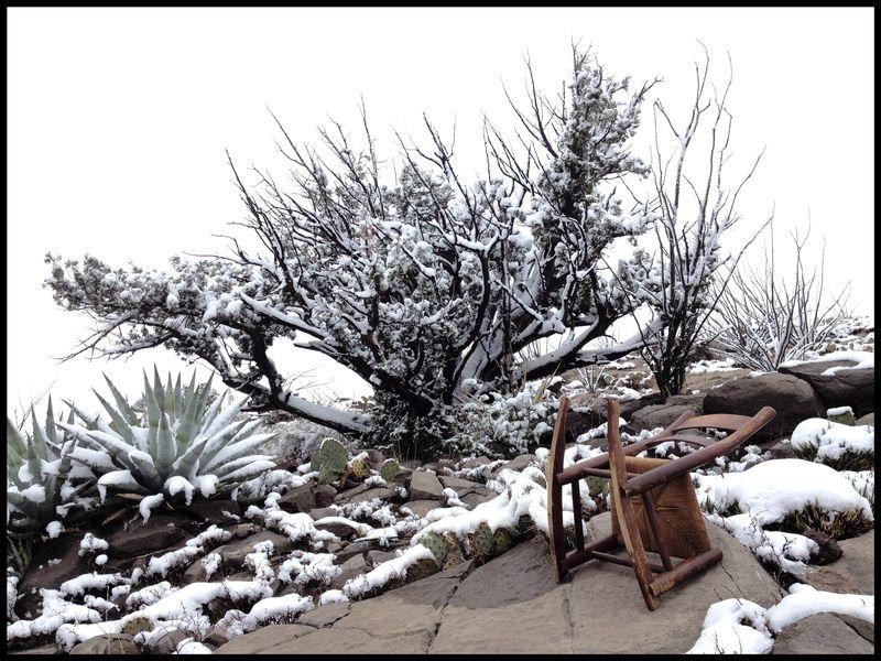 *New-PBRC-Juniper-Snow-#1