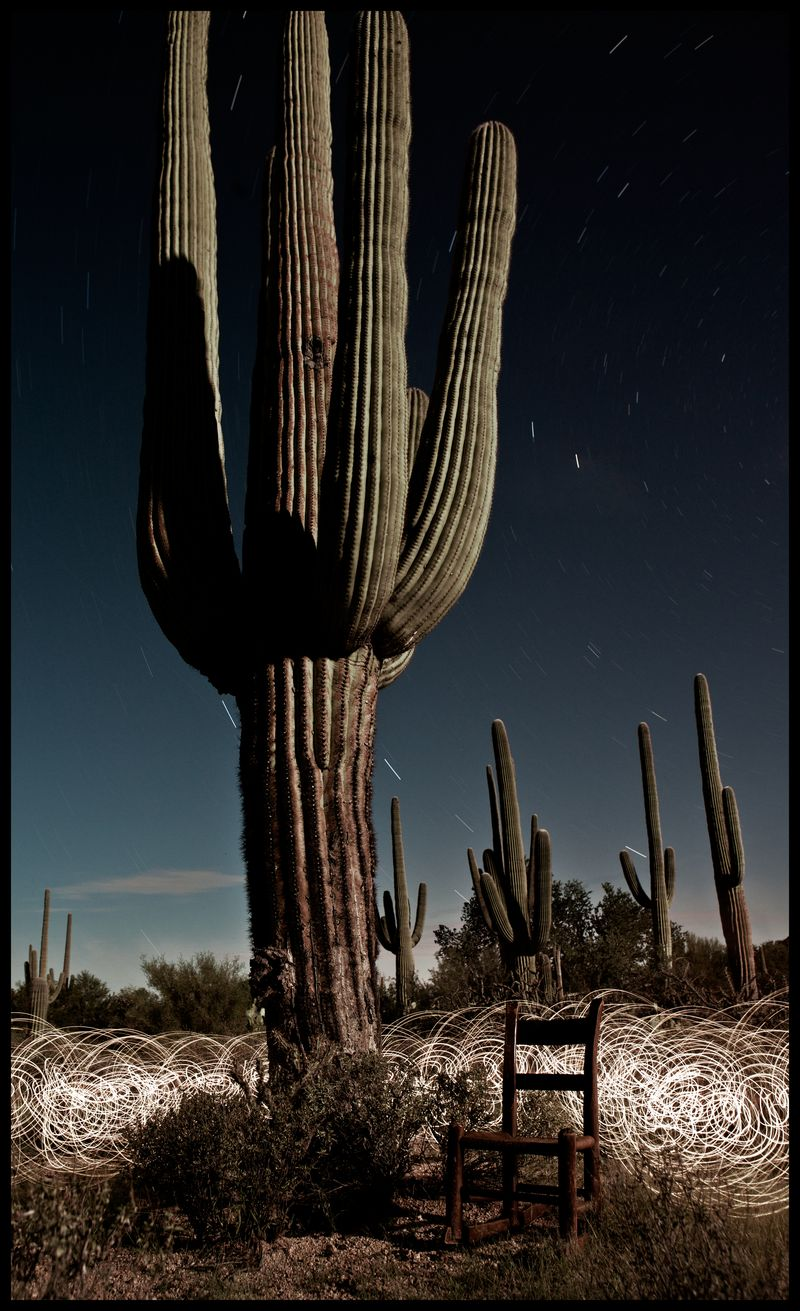 Lone Saguaro On The Arizona Trail  Arizona