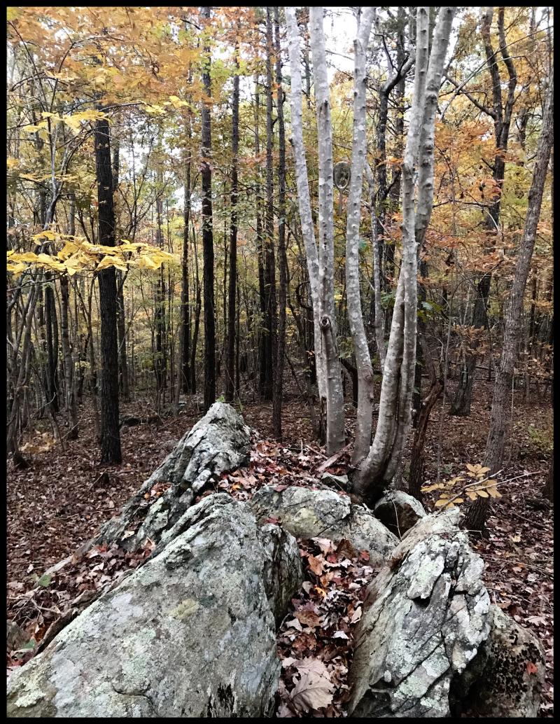NM-Uwharrie-Rocks-#18