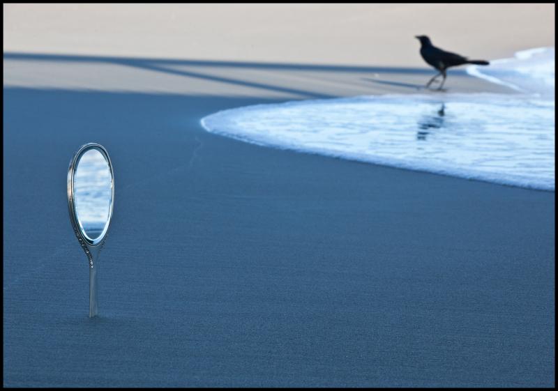 NM-Atlantic-Beach-with-Crow-#18