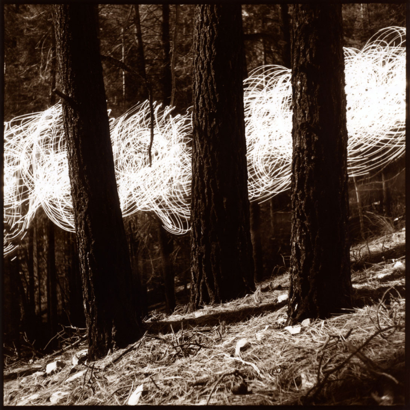 2-The Three Surrender Trees  Arizona
