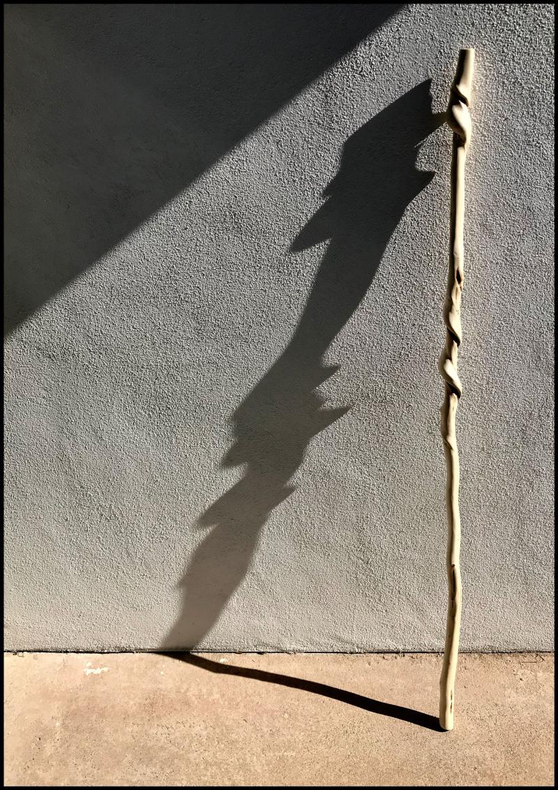 Spiral-Skin-Hornbeam-#19A
