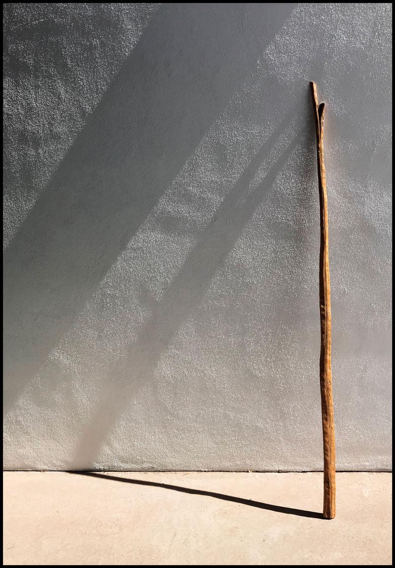 Saguaro-66-#19