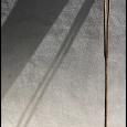 Saguaro-Split-#19