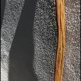 Saguaro-Tall-(Detail)-#19
