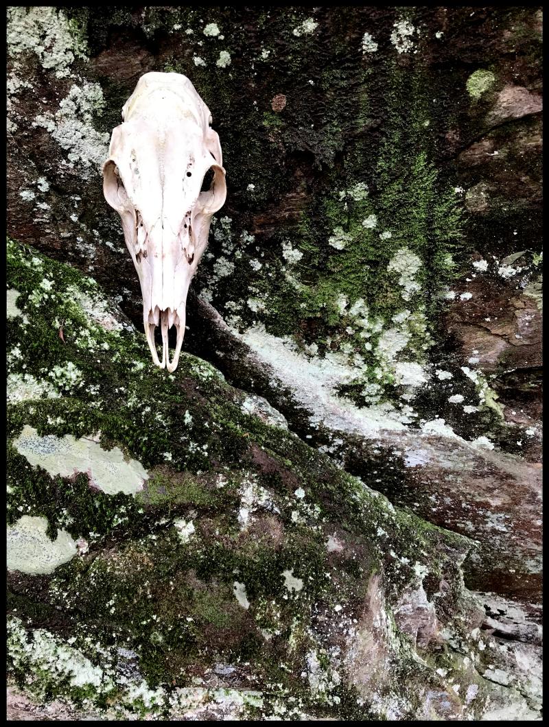 DS-Ararat-Moss-#19