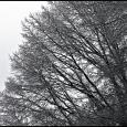 Randall-Jarrell-Oak-Ice-Storm-#19
