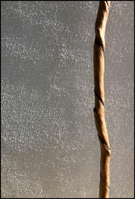 Red-Oak-Spiral-#19B