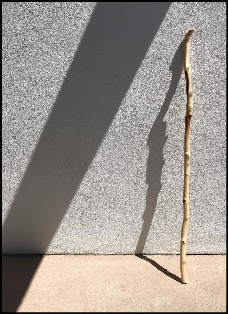 Aspen-Scar-#19
