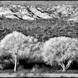 Cottonwoods-Dudleyville-#20