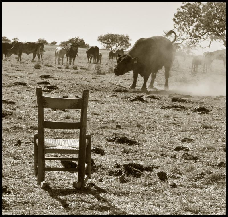 PBRC-Unhappy-Bull-#19