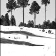 Happy-Jack-4-Trees-#20