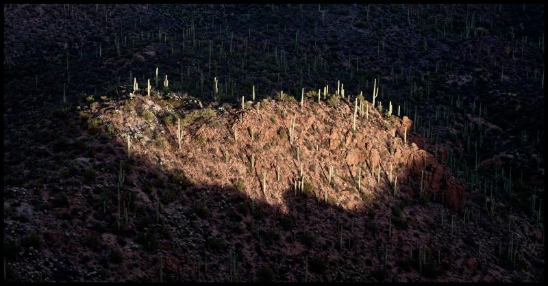 37-Year-Saguaros-#19
