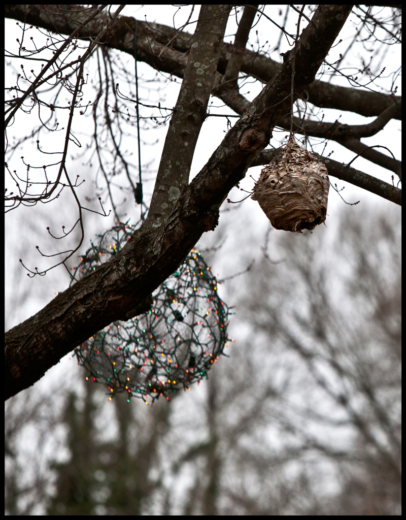 Wasp-Nest-&-Xmas-Ball-#20