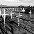 Topawa-Crosses-#20