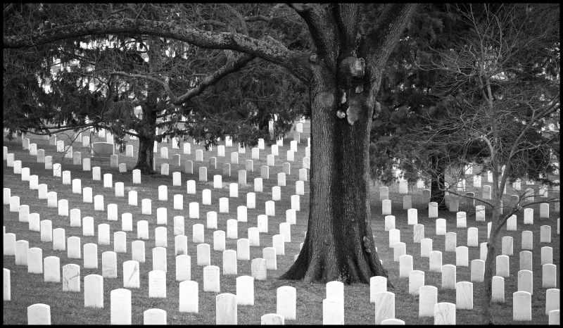 Arlington-Tree-Two-#21